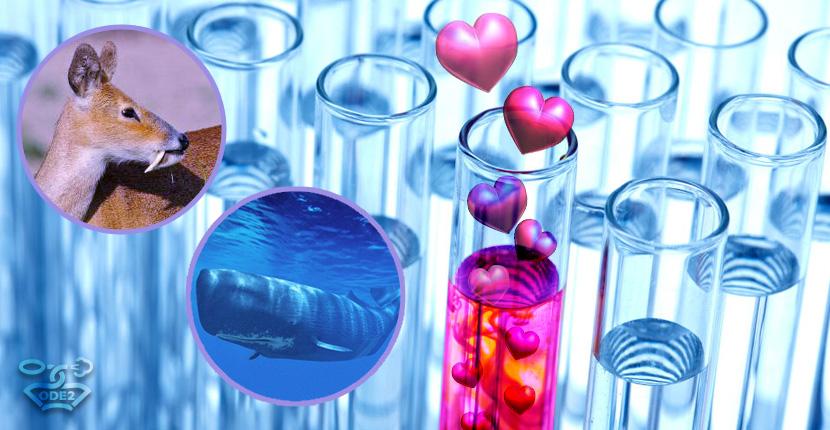 альдегидные-ароматы-что-это-такое-парфюмерия-одэту-оде2ру
