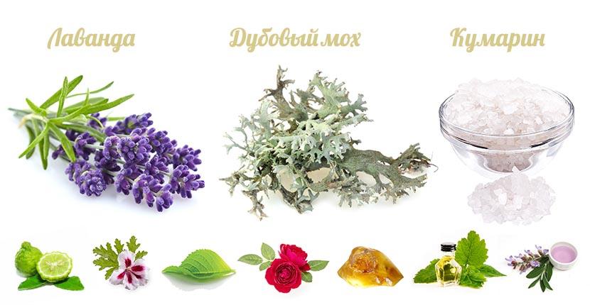 классический состав фужерного аромата fougere royale