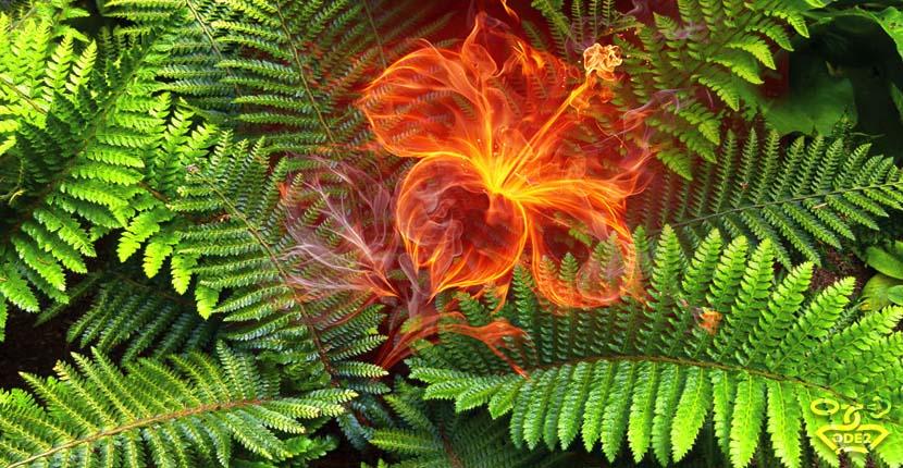 огненный цветок папоротника - фужерный аромат