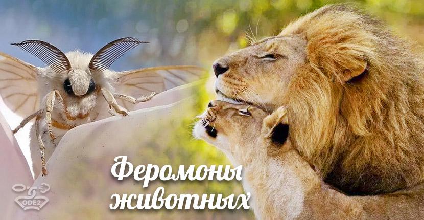 феромоны-у-животных-что-такое-духи-с-феромонами-одэту